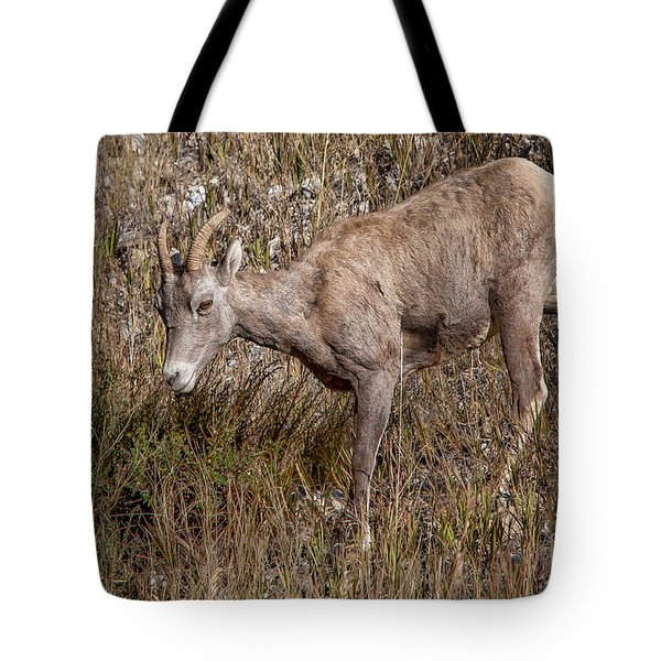 Bighorn Ewe Tote Bag