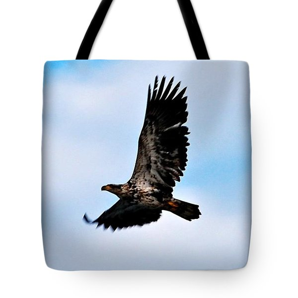 Tote Bag featuring the photograph  Juvenile Bald Eagle by Peggy Franz