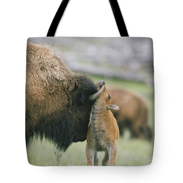 A Female Bison Bison Bison Stands Tote Bag by Tom Murphy