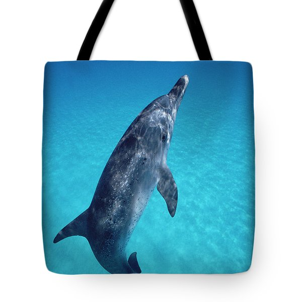 Atlantic Spotted Dolphin Portrait Tote Bag by Flip Nicklin