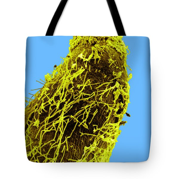 Bacteria On Sorghum Root Tip Tote Bag by Science Source