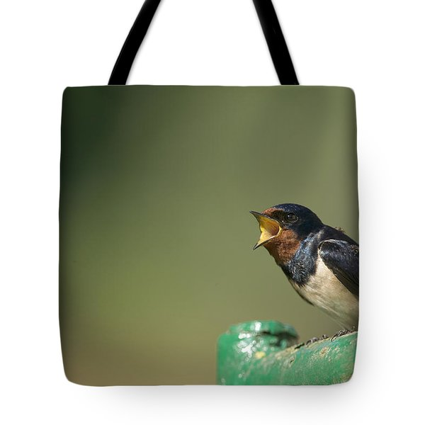 Barn Swallow Hirundo Rustica Fledgling Tote Bag by Cyril Ruoso