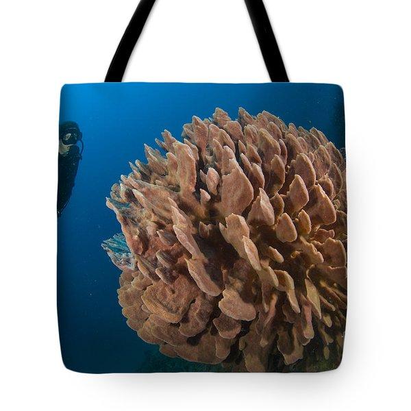 Barrel Sponge And Diver, Papua New Tote Bag by Steve Jones