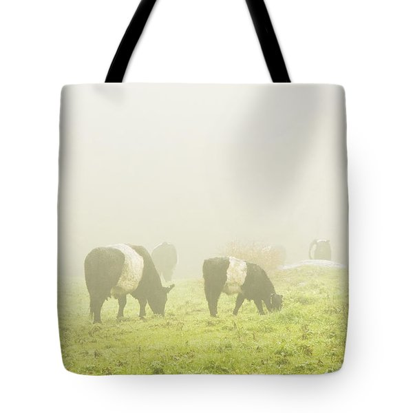 Belted Galloway Cows Grazing On Foggy Farm Field Maine Tote Bag by Keith Webber Jr