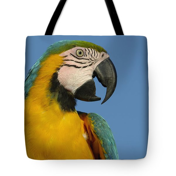 Blue And Yellow Macaw Ara Ararauna Tote Bag by Pete Oxford