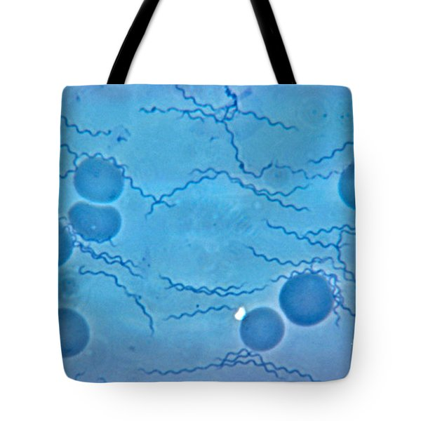 Borrelia Recurrentis Tote Bag by Eric V. Grave