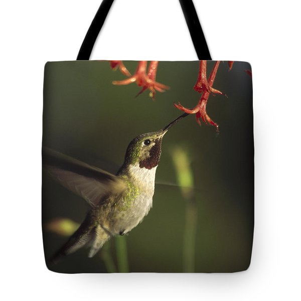 Broad Tailed Hummingbird Feeding Tote Bag