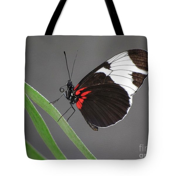 Tote Bag featuring the photograph Butterfly  by Tam Ryan