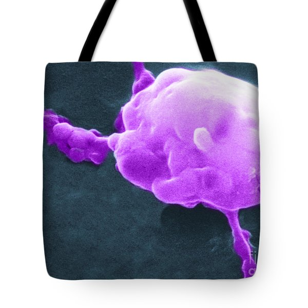 Cancer Cell Death, Sem 5 Of 6 Tote Bag by Science Source