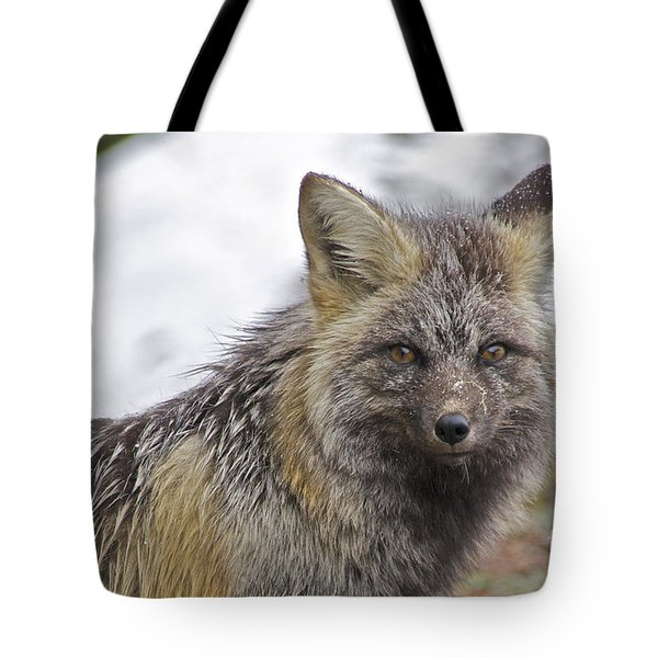 Cascade Red Fox Tote Bag
