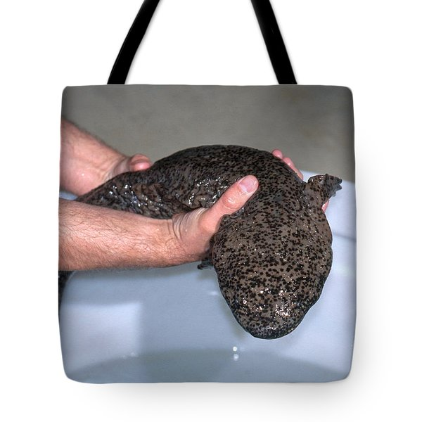 Chinese Giant Salamander Tote Bag