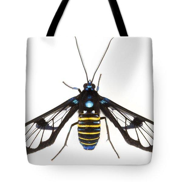 Clearwinged Tiger Moth Tapanti Np Costa Tote Bag by Piotr Naskrecki