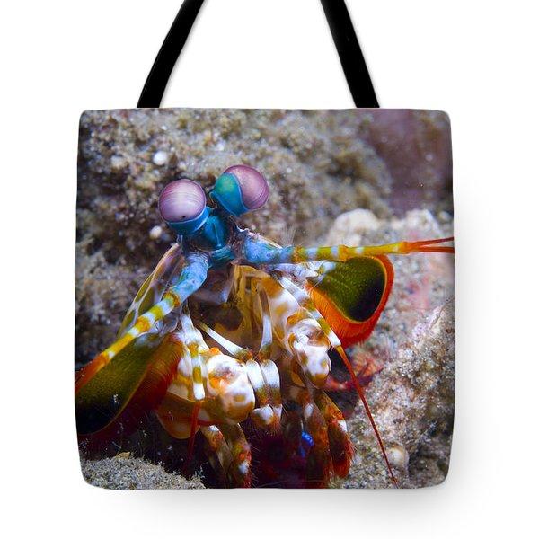 Close-up View Of A Mantis Shrimp, Papua Tote Bag by Steve Jones