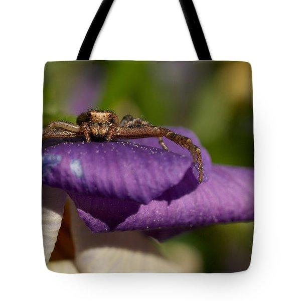 Crab Spider In A Violet Tote Bag by Jouko Lehto