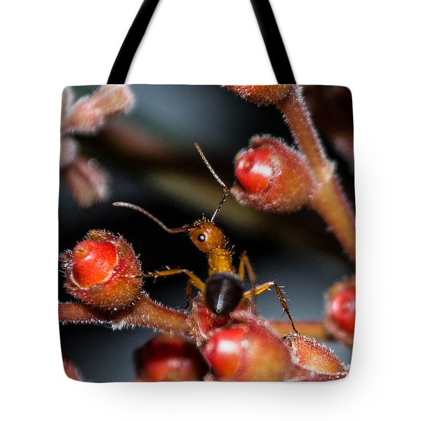 Curious Ant Tote Bag