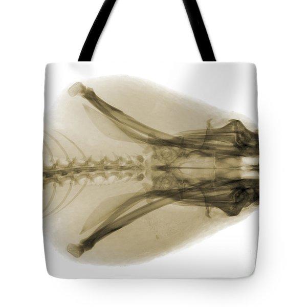 Eastern Diamondback Rattlesnake Head Tote Bag by Ted Kinsman