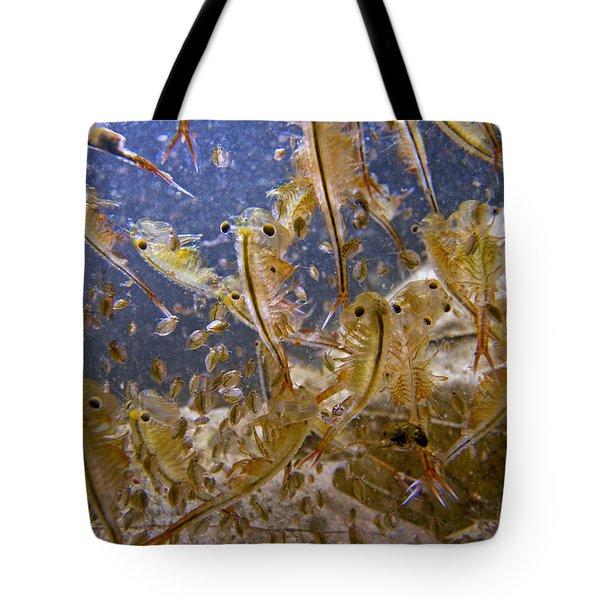 Eastern Fairy Shrimp Easterbrook Forest Tote Bag