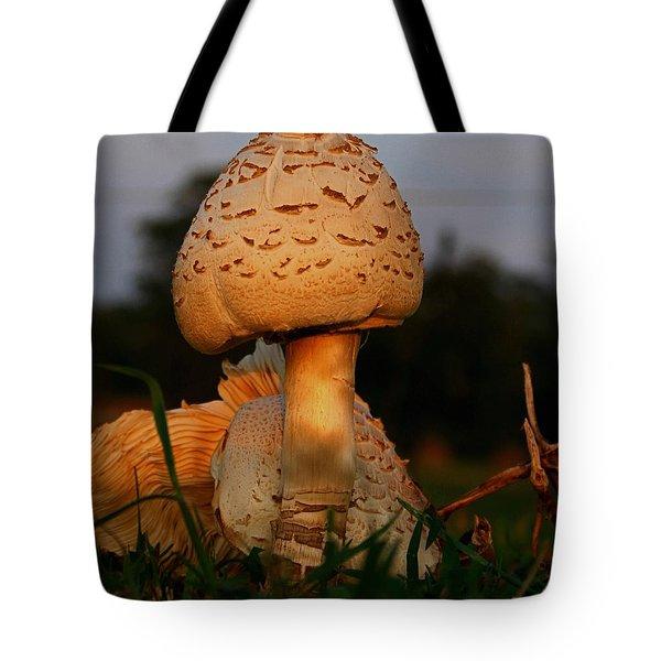 Evening Mushroom Tote Bag by Karen Harrison