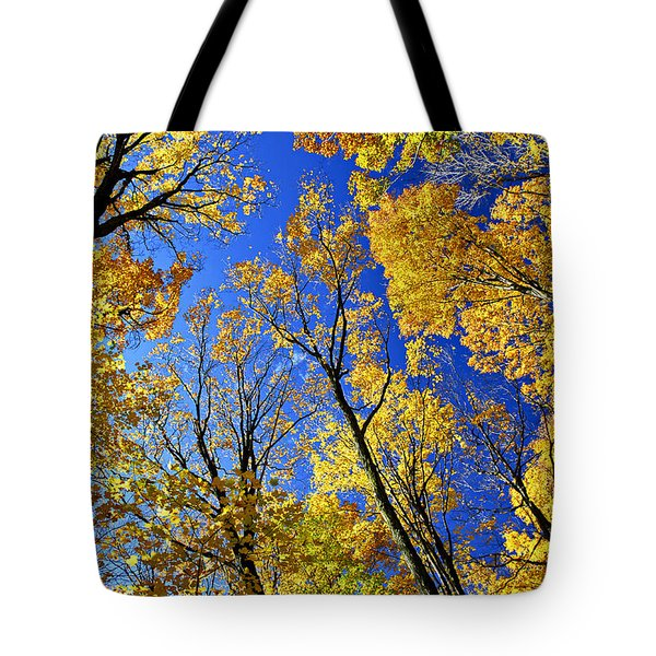 Fall Maple Trees Tote Bag by Elena Elisseeva