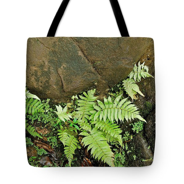 Ferns Tote Bag by Michael Peychich