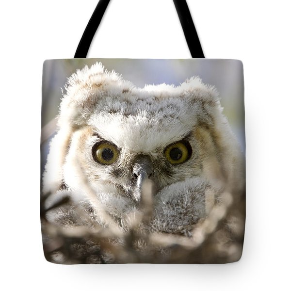 Great Horned Owl Babies Owlets In Nest Tote Bag by Mark Duffy