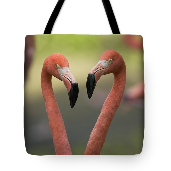 Greater Flamingo Phoenicopterus Ruber Tote Bag
