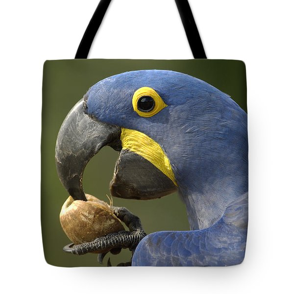 Hyacinth Macaw Anodorhynchus Tote Bag by Pete Oxford