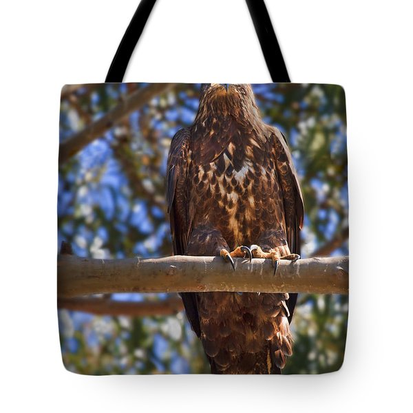 Immature Bald Eagle Tote Bag by Beth Sargent