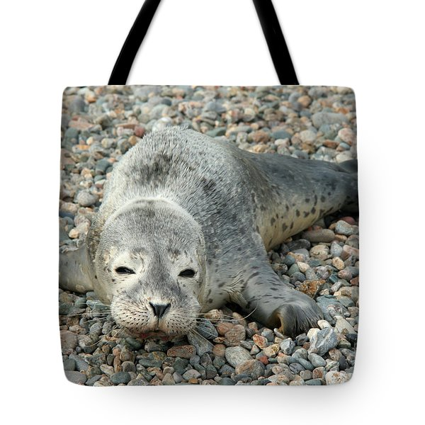 Injured Harbor Seal Tote Bag by Ted Kinsman