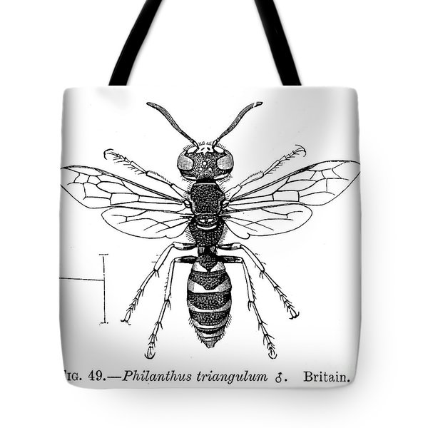 Insects: Wasps Tote Bag by Granger