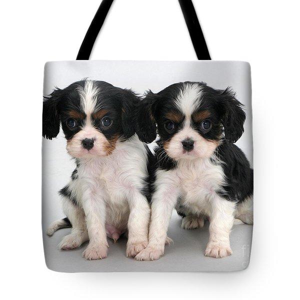 King Charles Spaniel Puppies Tote Bag by Jane Burton
