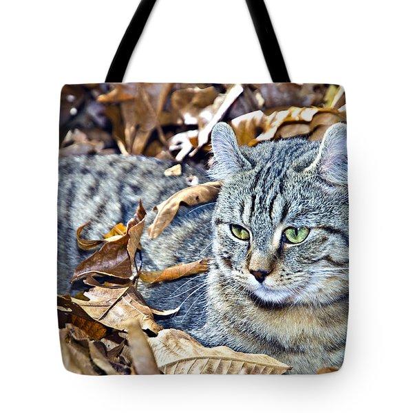 Kitten In Leaves Tote Bag