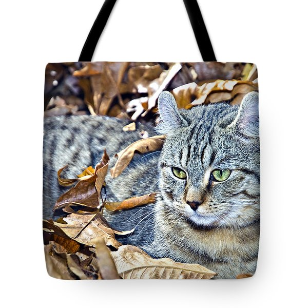 Tote Bag featuring the photograph Kitten In Leaves by Susan Leggett