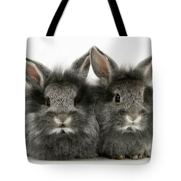 Lionhead Rabbits Tote Bag by Jane Burton