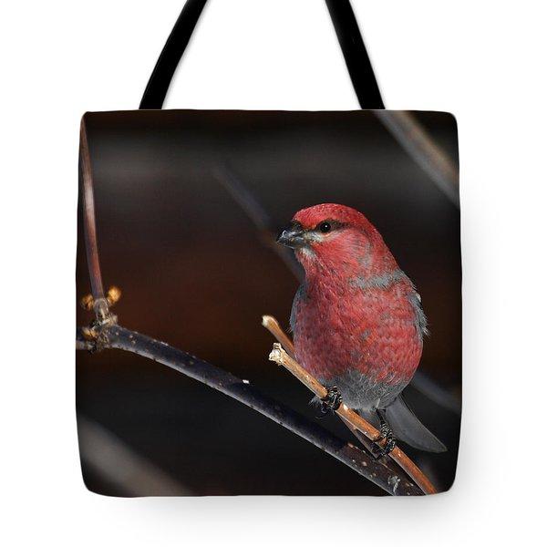 Male Pine Grosbeak Tote Bag