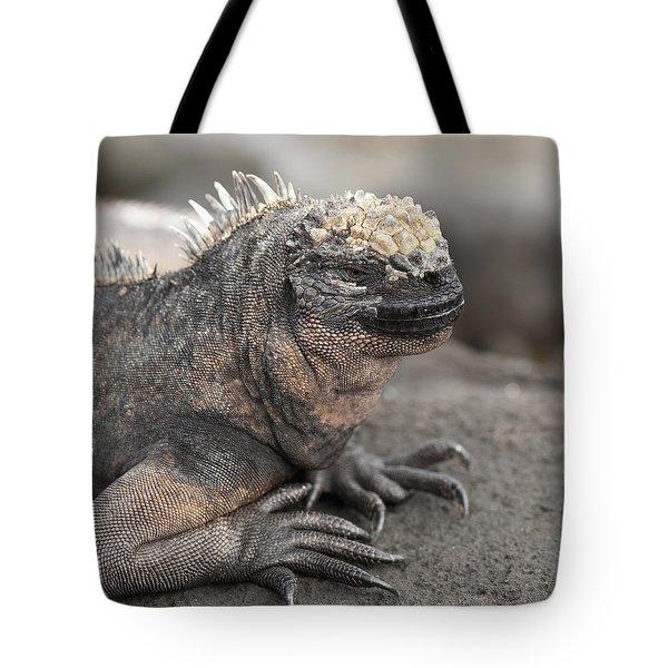 Marine Iguana Amblyrhynchus Cristatus Tote Bag by Keith Levit