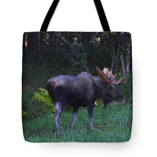 Tote Bag featuring the photograph Morning Light by Doug Lloyd