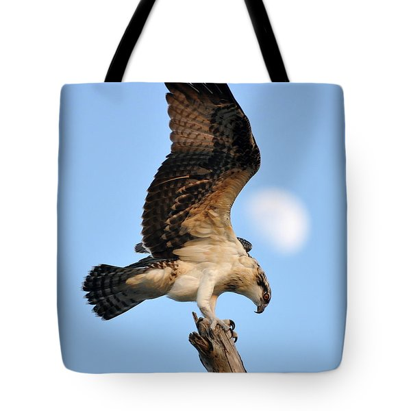 Osprey In Flight Tote Bag by Rick Frost
