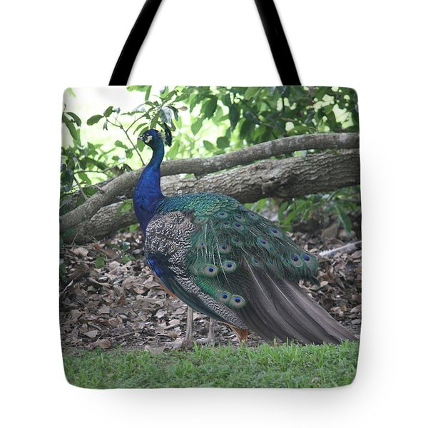 Tote Bag featuring the photograph Peacock by Donna  Smith