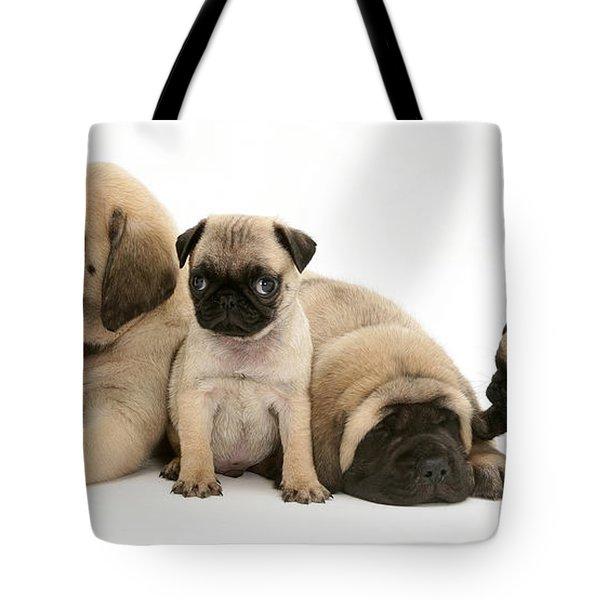 Pug And English Mastiff Puppies Tote Bag by Jane Burton