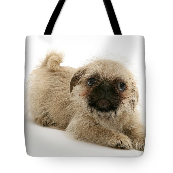 Pugzu And Pug Puppies Tote Bag by Jane Burton