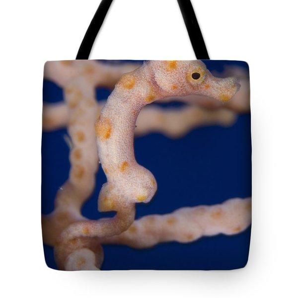 Pygmy Seahorse On Sea Fan, Papua New Tote Bag by Steve Jones