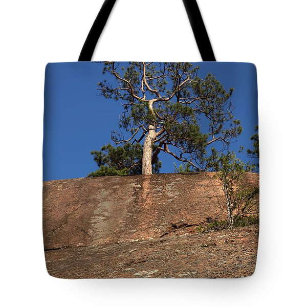 Red Pine Tree Tote Bag by Ted Kinsman