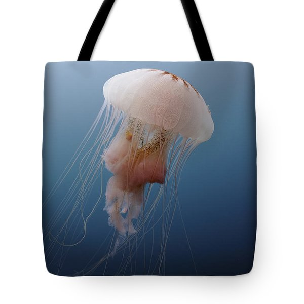 Sea Nettle Jellyfish In Atlantic Ocean Tote Bag by Karen Doody