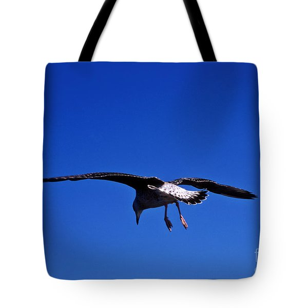 Seagull In Flight Tote Bag by John Greim