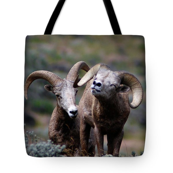 Tote Bag featuring the photograph Smile by Steve McKinzie