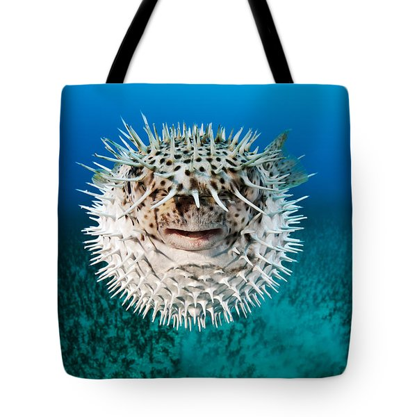 Spotted Porcupinefish Tote Bag by Dave Fleetham