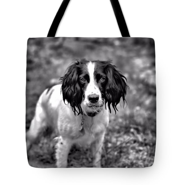 Springer Spaniel Tote Bag by Marlo Horne