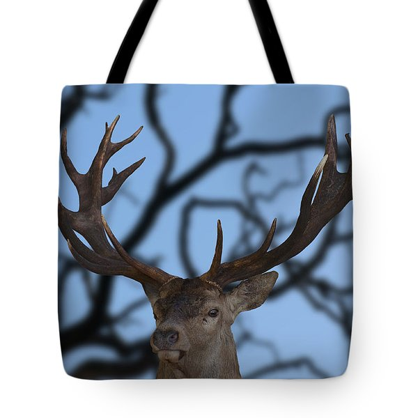 Stag Ramifications Tote Bag by Michael Mogensen