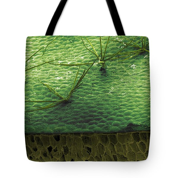 Staghorn Fern, Sem Tote Bag by Ted Kinsman